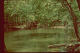 572. Fourteen Mile Creek, 1980