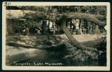 People on the Wooded Lawn of Sargent's Hotel
