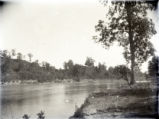 Wabash River and trees, Posey County, IN