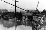 Flood, Evansville, IN, Jan. 1937, Duplicate of 272-535